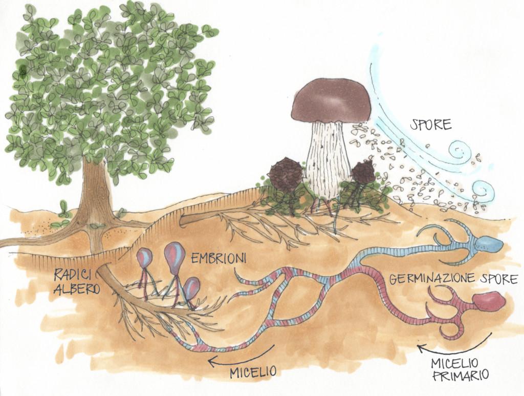 Quali mezzi sono migliori da un fungo di unghia