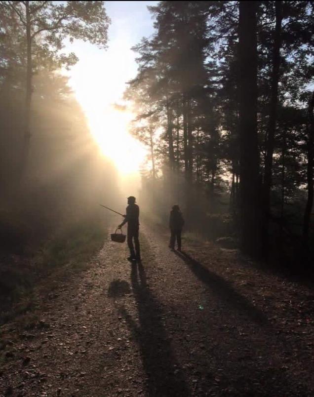Passeggiate nel bosco