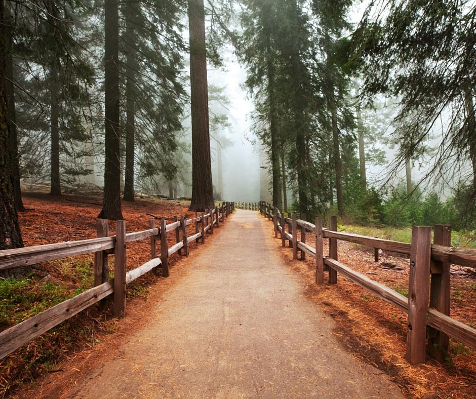 Camminare nel bosco, passeggiare nella natura