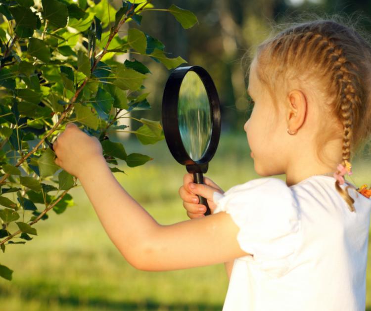 Lezioni di foraging