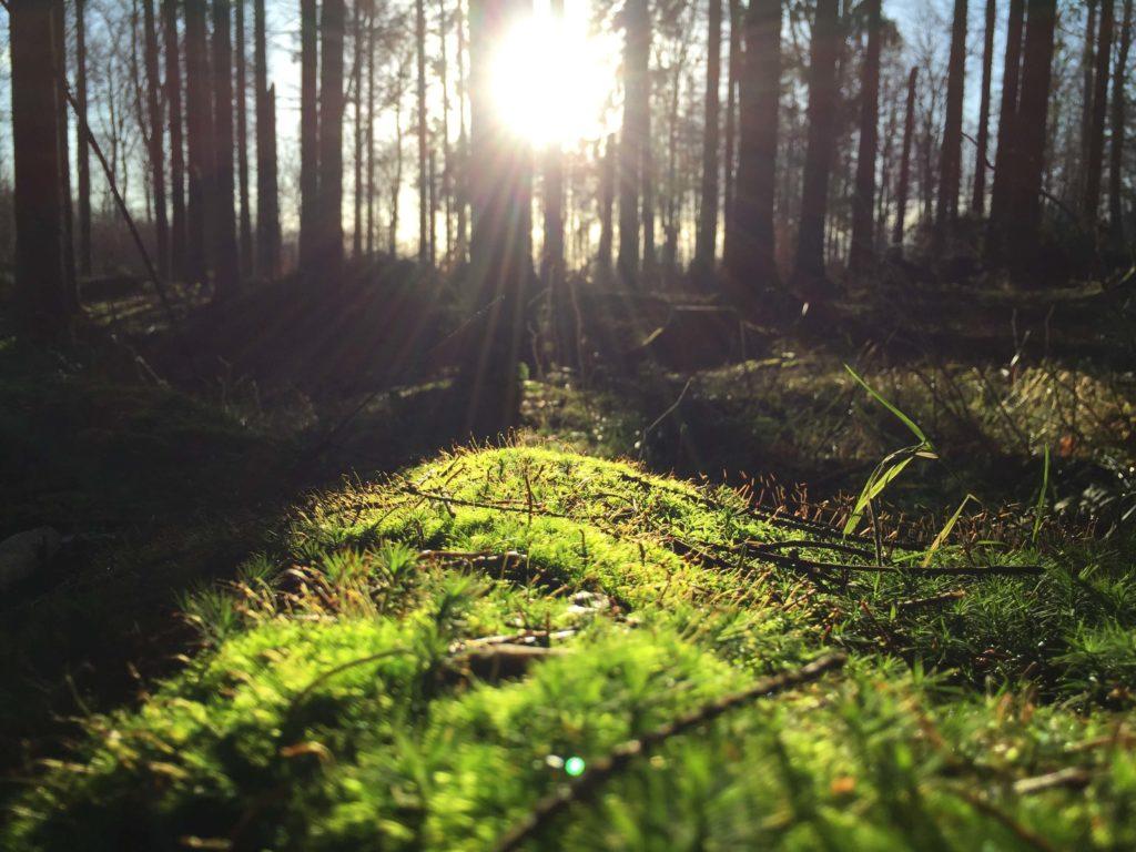 Strutture ecosostenibili WWF Travel