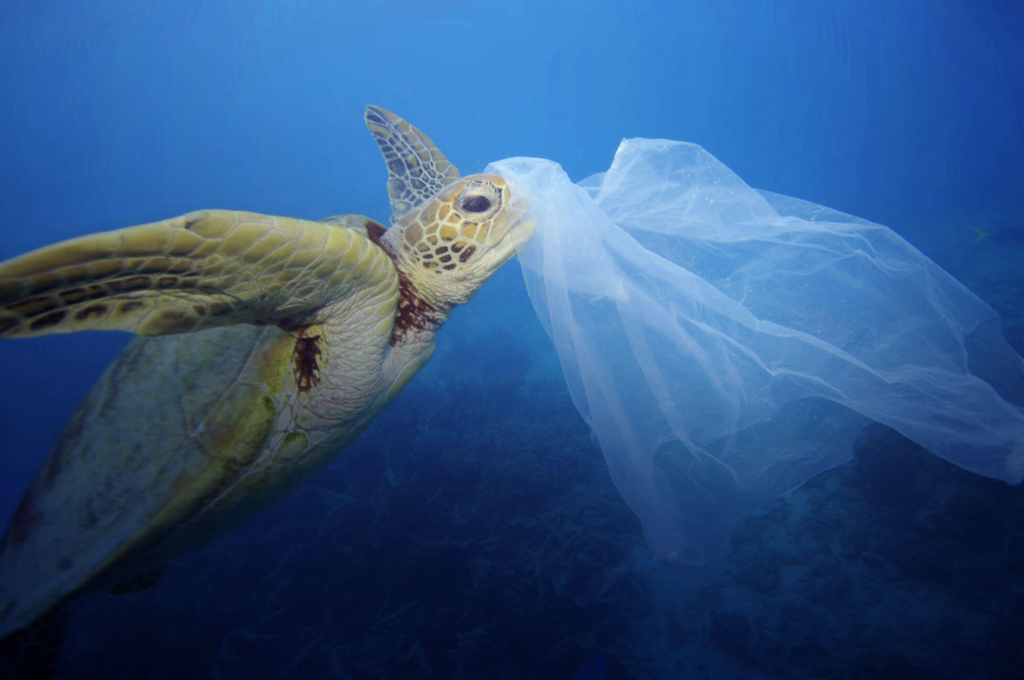 Quanta plastica ingeriamo